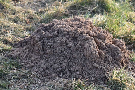 Closeup of a brown molehill at a garden in Germany