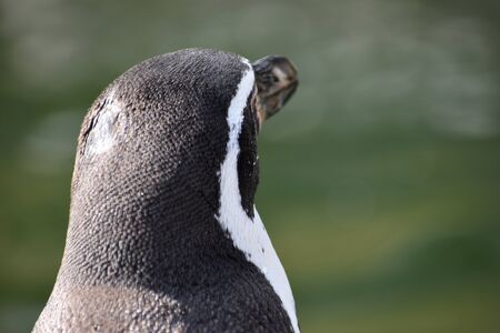 Wonderful portrait of a cute penguin from behind