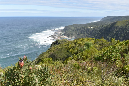Mountainous landscape with the beautiful beach and pink King proteas at Tsitsikamma National Park, South Africa Stock Photo