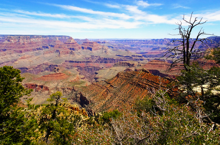 Beautiful view of Grand Canyon with a gnarled pine in front at Arizona in the USA Stock Photo