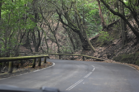 Beautiful street to the laurel forest with many big green mossy trees in the north of Tenerife in the Anaga Mountains