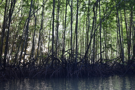 Kayak trip in the mangrove forest at Ao Thalaine at Krabi in Thailand, Asia