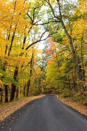 Roadway surrounded by golden fall trees in Baraboo, Wisconsin