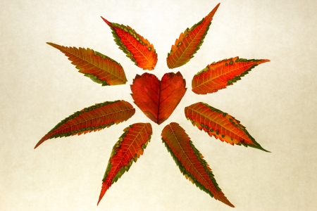 Close up of isolated red heart-shaped leaf on white paper symbolizes love and the beauty of fall