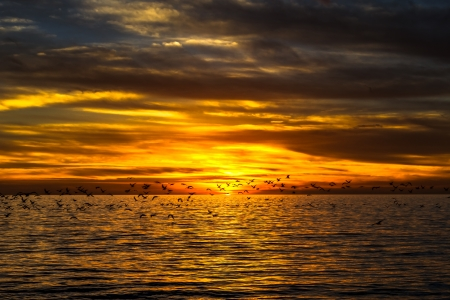 dramatic golden sunset over the ocean with flying seagulls Stock Photo