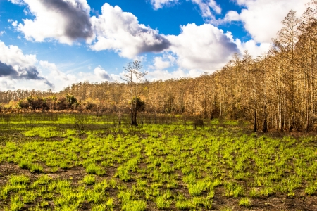 regrowth forest after fire with beautiful green grass