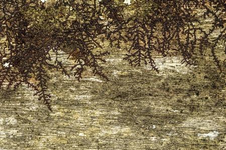 close-up van een oude ruwe houten textuur met bruine korstmossen