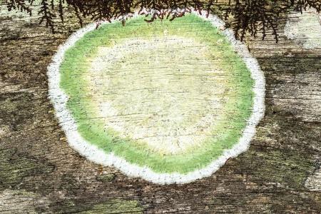close-up van een oude ruw hout textuur als achtergrond met groene schimmel