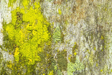 close up of an old rough wood background texture with lichen Stock Photo - 17174628