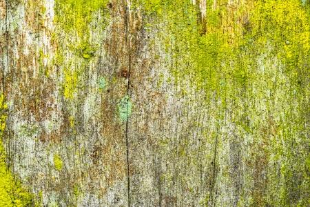 close-up van een oude ruw hout textuur als achtergrond met korstmos