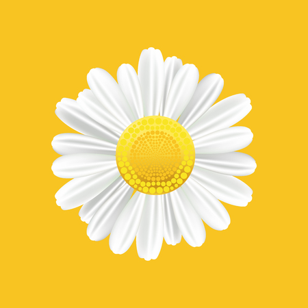 daisyflower: Chamomile realistic symbol. Yellow background with isolated chamomile. Vector illustration.