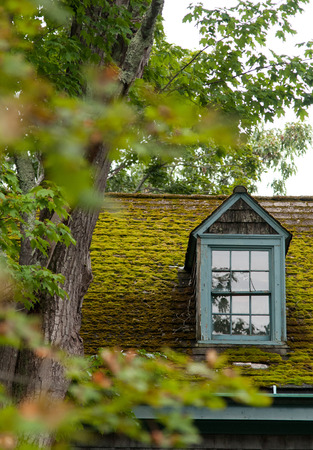 Dormer window and moss covered roof of an old Cape Cod style house