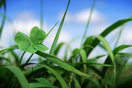 野草: 四葉のクローバーのメモリー容量を有効野生草の焦点、クローバーの成長