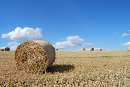 Hay bails in a field prepared for harvest Stock Photo