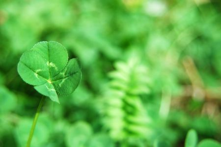 Four leaf clover standing out from background Stock Photo - 2444596