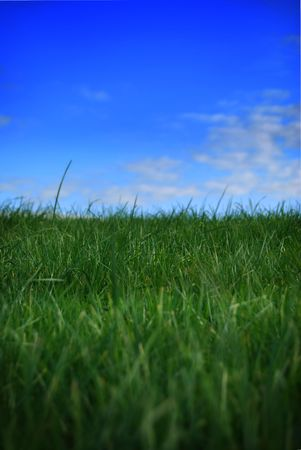 Green healthy grass and vivid sky. Stock Photo - 2444605