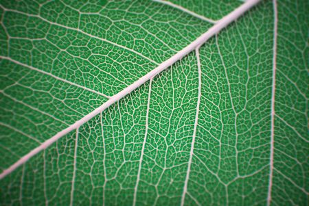 Macro shot, showing the fine detail of a leaf Stock Photo - 2444626