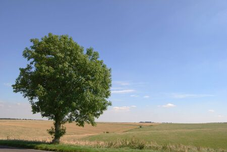 Lone tree near the roadside with rolling hills in the background Stock Photo - 2444622