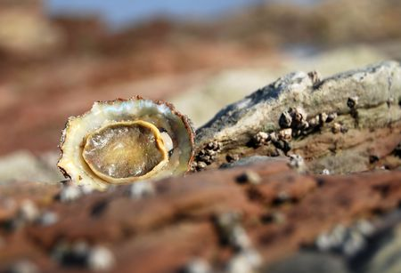 overturned: A lonely overturned limpet focus on the limpet