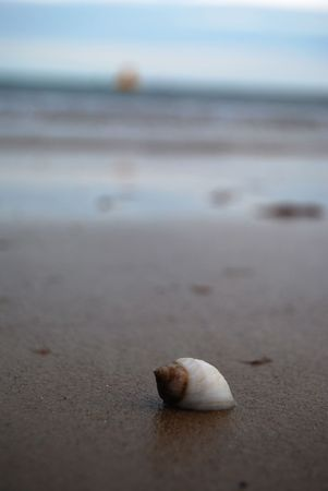 Lone shell on a beach Stock Photo - 2444593