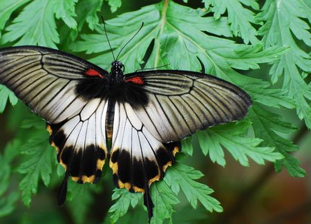 Beautiful coloured butterfly resting on a leaf. Stock Photo - 2905104