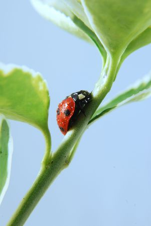 Ladybird on plant stem covered in water drops Stock Photo - 3194375