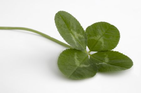 traditionally irish: Four leaf clover isolated on a white background