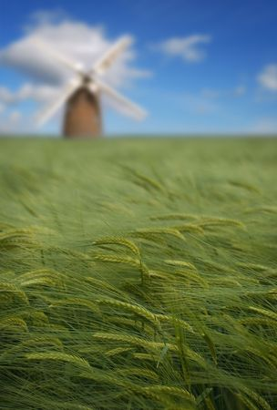Field of crops with windmill in the distance, energy conservation theme. Stock Photo - 3194395
