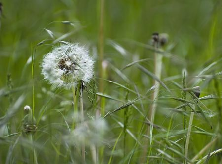 Dandelion and grasses in a over growing garden Stock Photo - 3194382