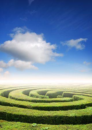 doolhof: Hedge doolhof onder een zomers hemel, probleemoplossing concept Stockfoto