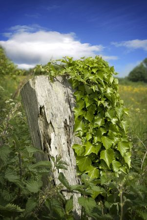 Old rotting post covered in vegetation Stock Photo - 3194397