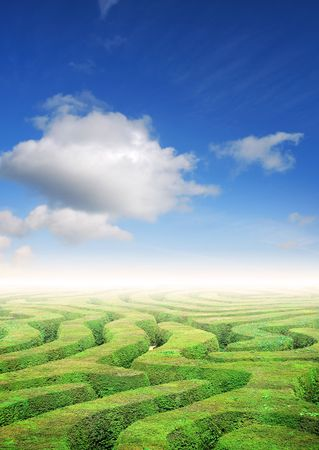 puzzling: Hedge maze under a summers sky, problem solving concept