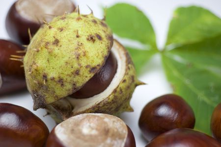 Conker in its shell surrounded by other opened conkers Stock Photo - 3583772