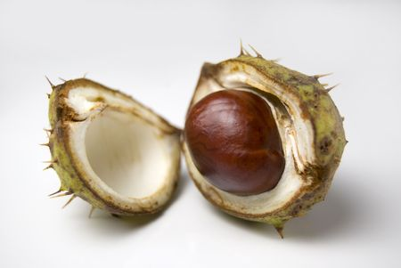 A lone conker in its shell isolated on a white background Stock Photo - 3583766