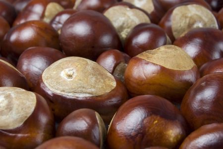 Large group of conkers all grouped together Stock Photo - 3583773