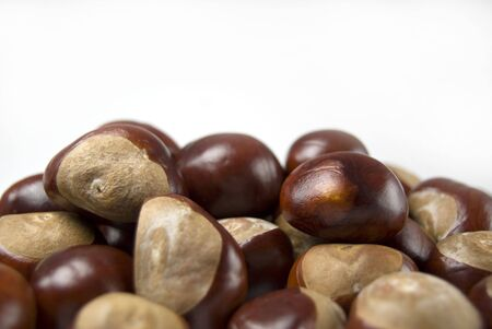 group of conkers with space for text Stock Photo - 3583767