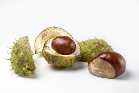 conkers: Two conkers one in its shell one set free Stock Photo
