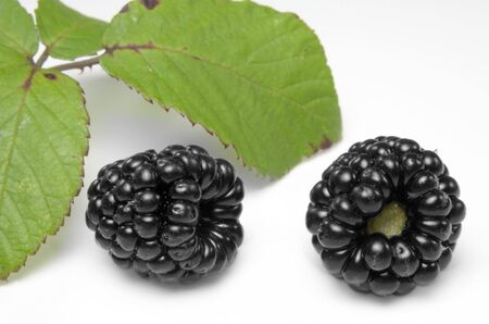 Ripe blackberries with leaves in the ds Stock Photo - 3614870