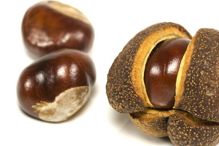 A conker in its opening shell with other conkers in the background Stock Photo - 5623978