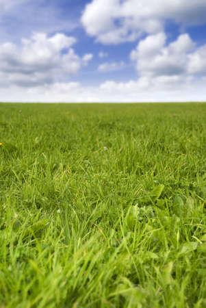 Beautiful fresh green grass field under a summers sky Stock Photo - 5623980