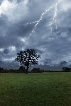 Lightning strikes above a tree on a stormy day.