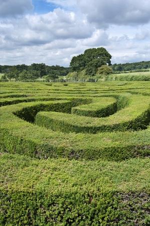 Complex hedge maze landscape