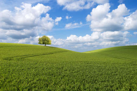 Lone horse chestnut tree stands on the hill top in a beautiful field landscape