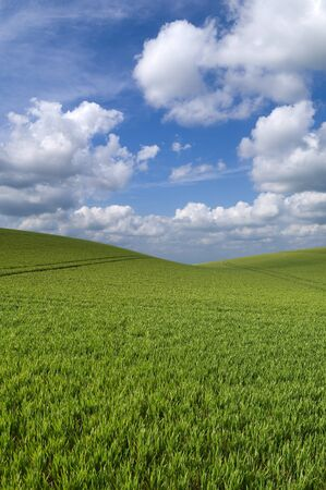 Beautiful rolling hill landscape with a sky of fluffy clouds Stock Photo - 9019853