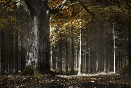 Sunlight shines through trees in a wood on an autumn morning