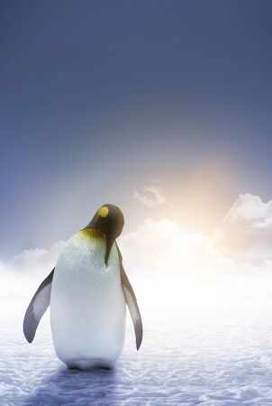 An Emperor penguin stands alone with the arctic sunrise Stock Photo