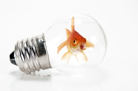 Goldfish trapped in a light bulb with its mouth open Stok Fotoğraf
