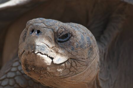 Close up shot of a very old tortoise Stock Photo - 13200344