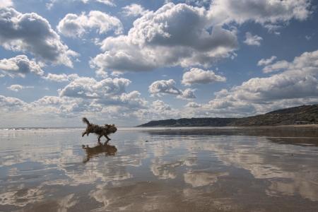 dog rock: A dog runs across a very reflective beach at Charmouth in Dorset, England Stock Photo