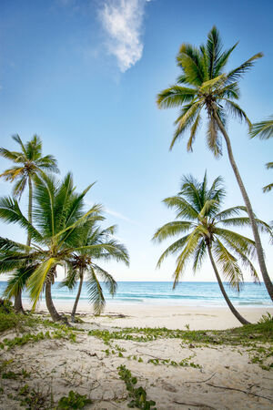 deserted: A stretch of beautiful unspoilt Caribbean Coastline